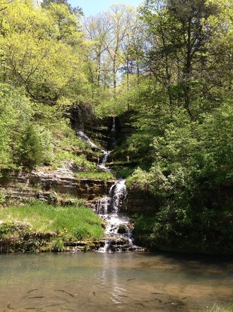 Dogwood Canyon Nature Park: Peaceful!