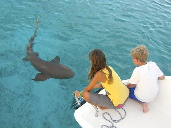 Makana Charters Sunset Dinner Sails: Can think of a better place to learn about sharks