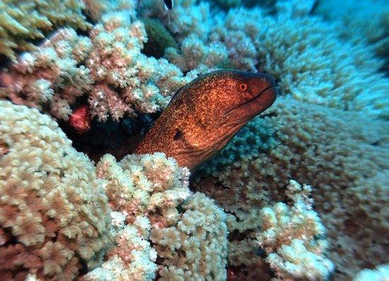 Asian-Belgian Dive Resort: Top Diving