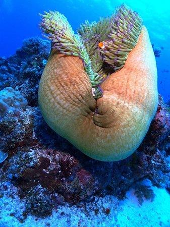Asian-Belgian Dive Resort: Top Diving!