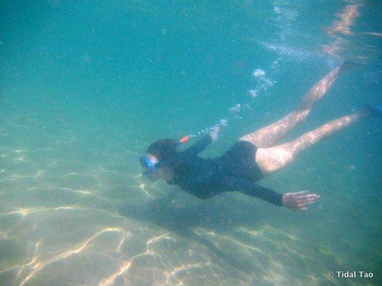 Tidal Tao Snorkeling Safaris: Incredible undersea world
