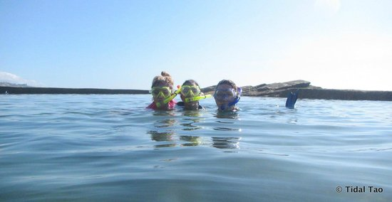 Tidal Tao Snorkeling Safaris: Fun for the entire family