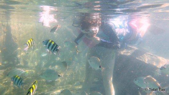 Tidal Tao Snorkeling Safaris: Loads of fish !