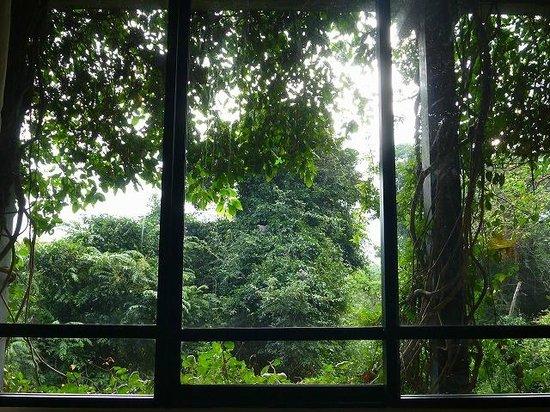 Heritance Kandalama: 気分は森の住人です。