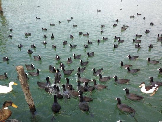 Lago d'Averno: 4