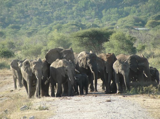 Tau Game Lodge : Elephants at watering hole outside restaurant