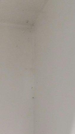 Adonis Les Hauts de Honfleur : Toile d araignées dans la salle de bain