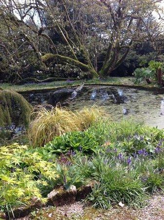 Trewidden Garden: still by the pond....