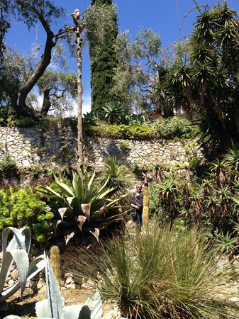 Giardini Botanici Hanbury: цветущее алое или агава и я рядом с ростом 178 см)))