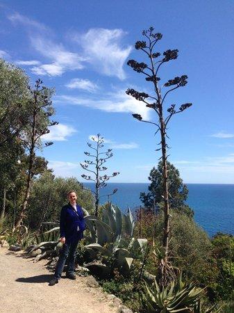 Giardini Botanici Hanbury: цветущее алое
