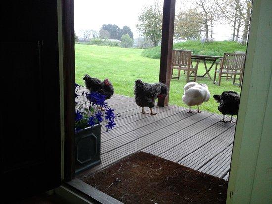 Munden House : morning visitors!