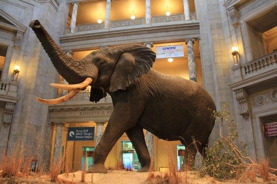 National Museum of Natural History : Smithsonian Ulusal Doğal Tarih Müzesi