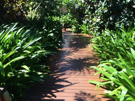 The Billi Resort: Walk ways