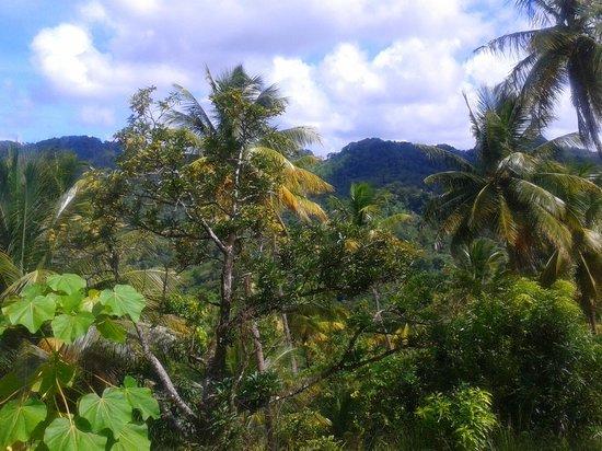 BodyHoliday Saint Lucia : Rain forest