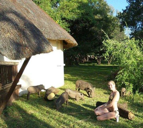 Chobe Safari Lodge : и месные газоно касилки