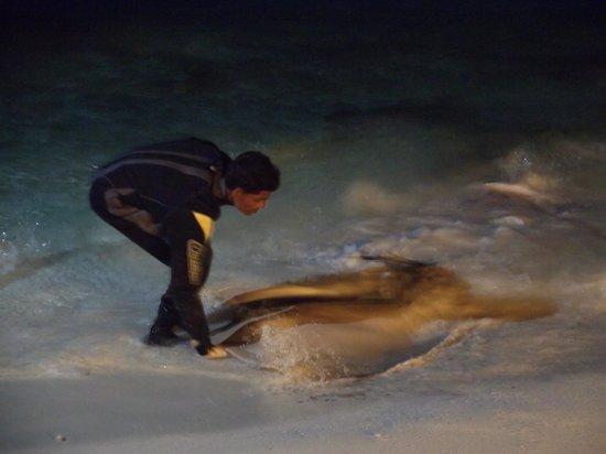 Kuramathi Island Resort : Dan de comer a las mantas
