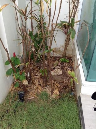 Samui Resotel Beach Resort : tropical garden