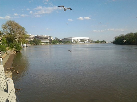 Georgetown: Seagulls search for good food in the water