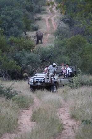 Sausage Tree Safari Camp : Elephant road block!