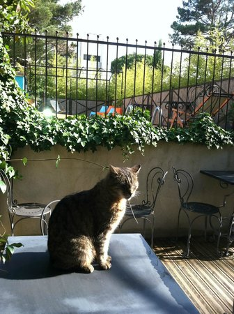 "Hotel Sous les Figuiers: Hotel's cat ""Greta Garbo"" in front of the pool"