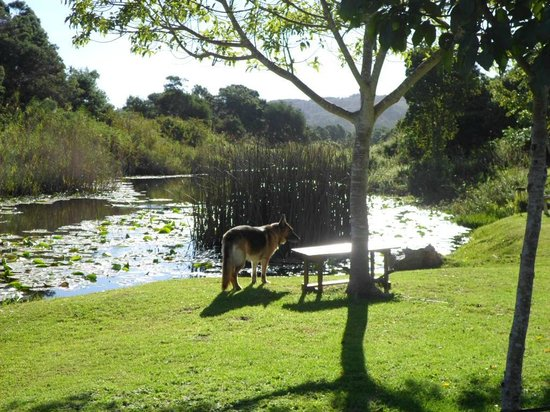 Bitou River Lodge : Peace and tranquility