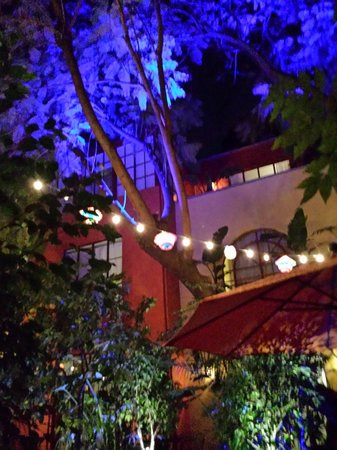 The Red Tree House: Courtyard at night