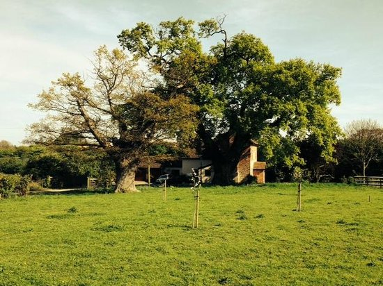 Oak Tree Farm Bed & Breakfast: Looking back at the farm from the dog walk