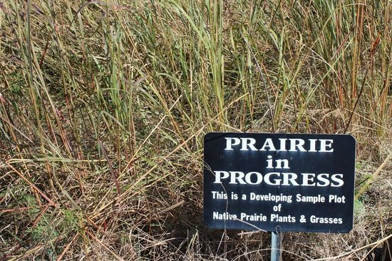 Cahokia Mounds State Historic Site: Prairie grass restoration, VC at Cahokia Mounds, Oct 2013