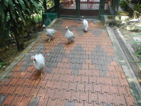Kuala Lumpur Bird Park : KL Bird Park