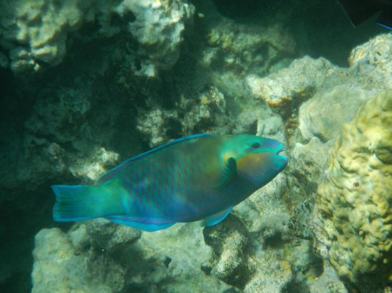 Hyatt Regency Sharm El Sheikh Resort : обитатели рифа