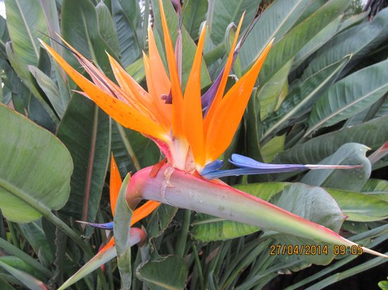 Hotel Villa La Tour : Bird of Paradise Cap Farrat