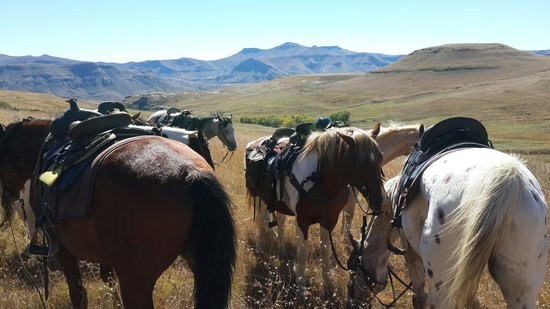 Bokpoort Cowboy Ranch: Horse riding at Bokpoort. Worth every cent!