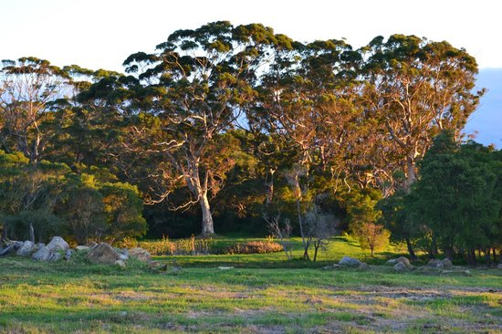 William Bay Country Cottages : The farm at sunset
