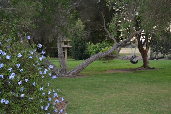 William Bay Country Cottages : Garden near the tennis court