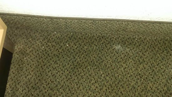 Red Roof Inn & Suites Brunswick I-95 : Carpet not vacuumed well