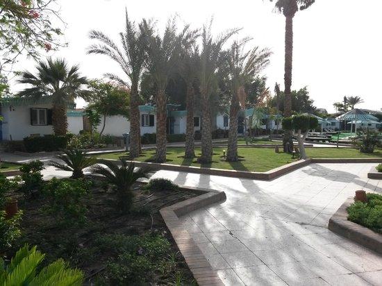 Ghazala Beach Hotel: Территория