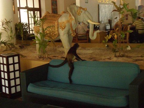 Sandos Caracol Eco Resort: singe en ballade :)