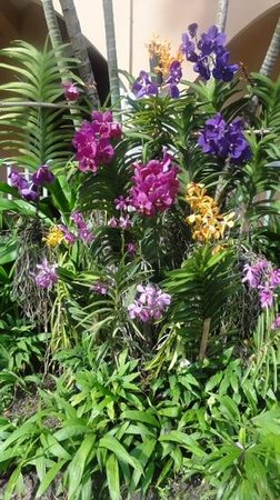 Anantasila Villa by the Sea, Hua Hin: Beautiful garden orchids