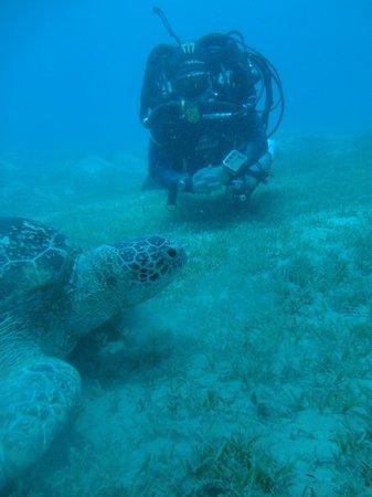 Ghazala Beach Hotel: В Нааме живу ТРИ больших черепахи! Иногда всплывают рядом с пляжем.