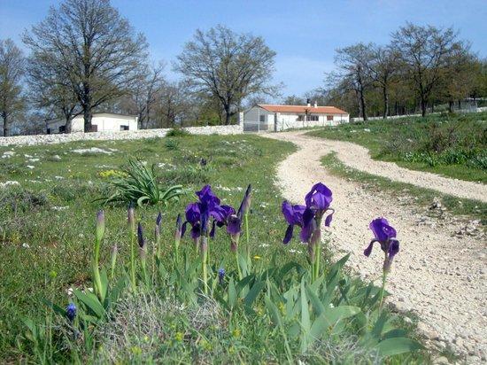 Oasi Agrituristica Le Chiancate