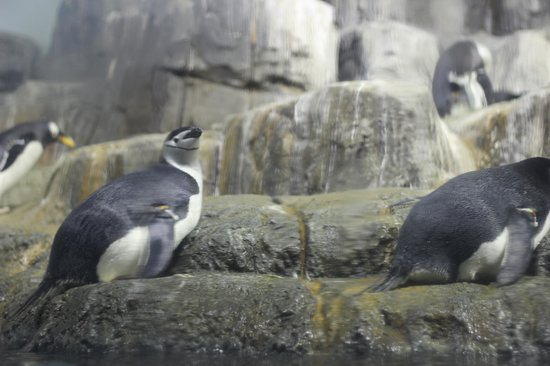 Central Park Zoo: I pinguini