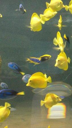 Inside a tank at Malta National Aquarium
