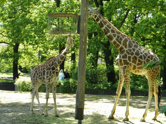 Berlin Zoological Garden : They are really close..