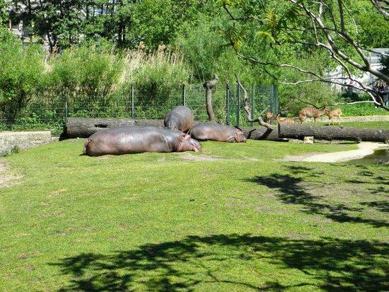Berlin Zoological Garden : Relaxing way of life