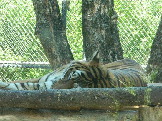 Birmingham Zoo: Nap time!