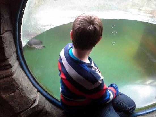 Cornish Seal Sanctuary: Watching