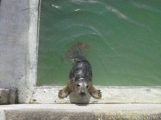 Cornish Seal Sanctuary: Seal