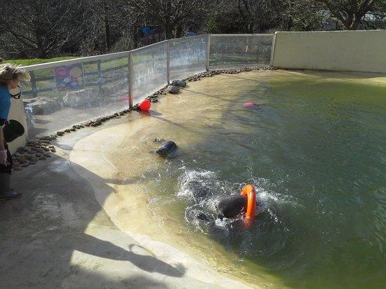 Cornish Seal Sanctuary: Do I get an extra fish?
