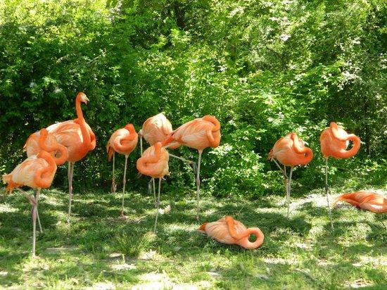 Birmingham Zoo: I love pink!