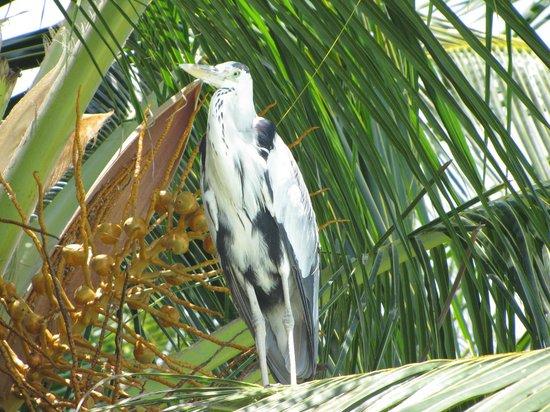 Fihalhohi Island Resort : UNLIMITED NATURE